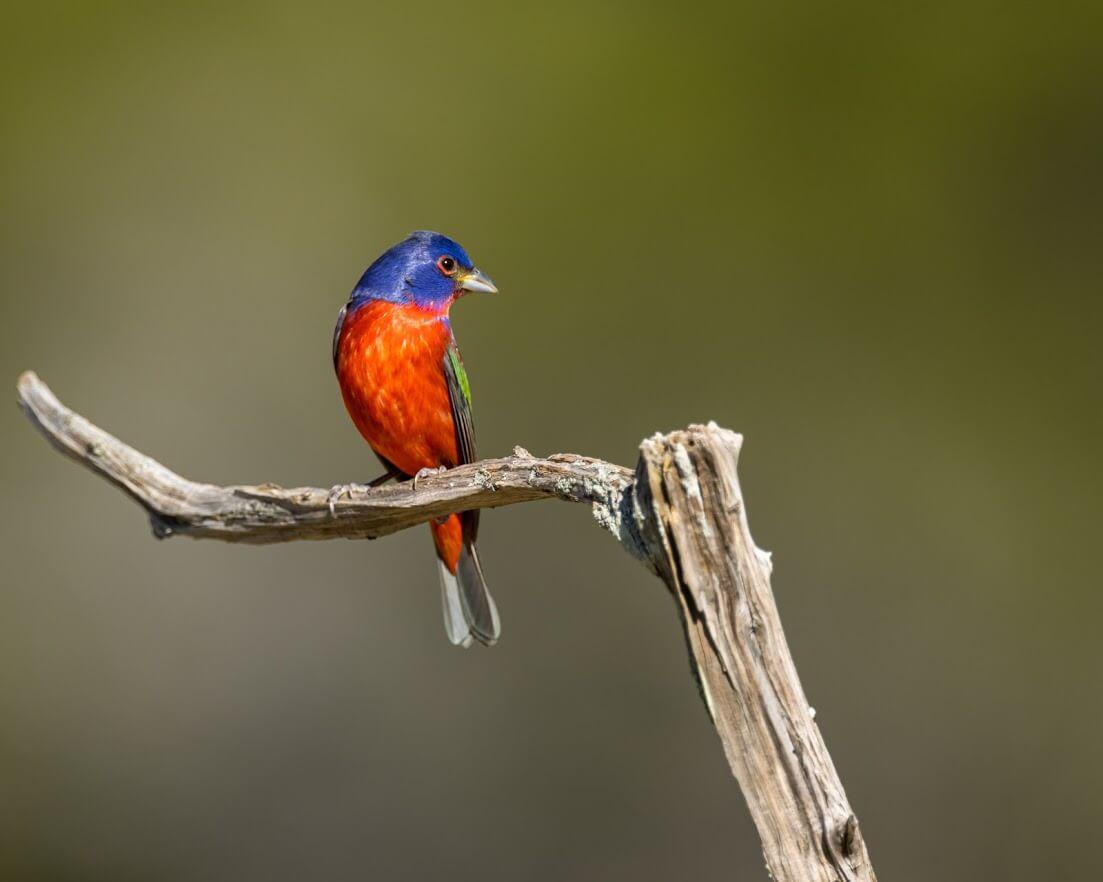 Summit Estates at Fischer colorful bird