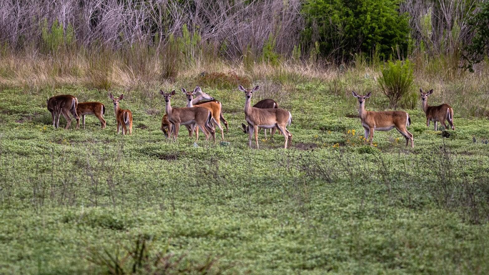 Summit Estates at Fischer deers