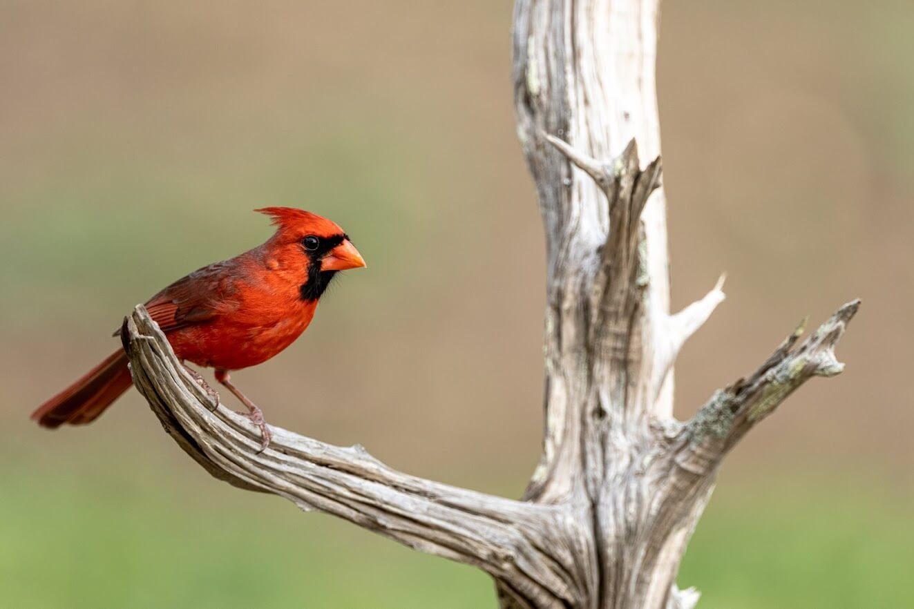 Summit Estates at Fischer orange bird